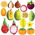 Exotic fruit set
