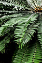 Exotic green plant leaves closeup in greenhouse Royalty Free Stock Photo