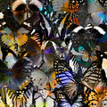 Exotic grey and beautfiull background from compilation of butter butterflies in the greatest set grace livery Stock Photography