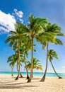 Exotic high palm trees, wild beach azure waters, Caribbean Sea, Dominican Royalty Free Stock Photo