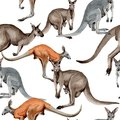 Exotic kangaroo wild animal pattern in a watercolor style. Royalty Free Stock Photo