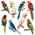 Exotic Multicolored Different Parrot Types Cartoon Set