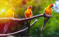 Exotic parrots sit on a branch wildlife Royalty Free Stock Image