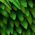 Exotic pattern with tropical leaves banana on a black background Royalty Free Stock Photo