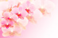 Exotic pink orchid flowers on blurred background spotted with free place for copy space your text Royalty Free Stock Photography