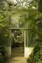 Exotic plants Stock Image