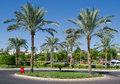 Exotic plants in egypt tourism travel sharm el sheikh hotel royal grand Stock Photos