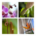 Exotic plants and flowers Royalty Free Stock Photo