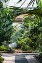 Exotic plants in the greenhouse Stock Photo