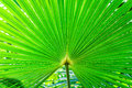 Exotic plants palm leaves in a detailed plan for backlit Stock Images