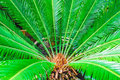 Exotic plants palm leaves in a detailed plan for backlit Royalty Free Stock Photo
