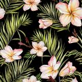 Exotic plumeria flowers and green palm leaves on black background. Seamless tropical pattern. Watercolor painting. Royalty Free Stock Photo