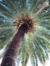 Exotic scenery- palm II Royalty Free Stock Photo