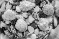 Exotic seabed of monochrome tone Royalty Free Stock Photo