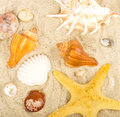 Exotic shell and crystals on sand Stock Images