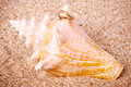 Exotic shell with golden wedding rings beautiful Royalty Free Stock Images