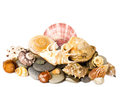 Exotic shell and stones Royalty Free Stock Photos