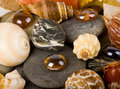 Exotic shell and stones Royalty Free Stock Images