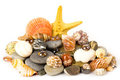 Exotic shell and stones Stock Image