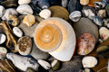 Exotic stones and shell beautiful background with Royalty Free Stock Photo
