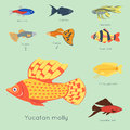 Exotic tropical fish different colors underwater ocean species aquatic nature flat isolated vector illustration