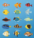Exotic tropical fish race different breed colors underwater ocean species aquatic strain nature flat vector illustration Royalty Free Stock Photo