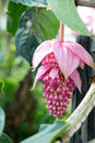 Exotic tropical flower flowering bush close up Royalty Free Stock Images