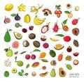 Exotic tropical fruits hand drawn set. Collection of whole fruit and cutaway. Avocado, Ackee, Banana, Guava, Dogwood