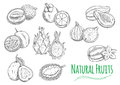 Exotic tropical fruits sketch icons