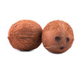 Exotic, tropical and organic coconuts, isolated on a white background. Two whole and healthy nuts. Bright brown coconuts.