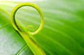 Exotic tropical shoots leaf with shallow depth of field dof Stock Photography