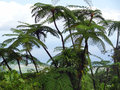 Exotic vegetation misty scenery including on a caribbean island named guadeloupe Stock Photography