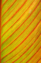 Exotic wood leaf bright of a tree against the light macro Stock Images