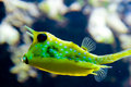 Exotic yellow fish Royalty Free Stock Photos