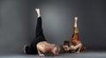 Experienced instructors posing while doing asana studio shot of Royalty Free Stock Photography