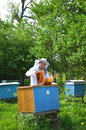 Experienced senior beekeeper putting empty honeycomb frames into a beehive in his apiary the springtime Stock Photo
