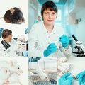 Experimental work with mice in laboratory environment collage Royalty Free Stock Images
