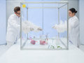 Experimenting on biological matter in sterile chamber two scientists the lab a men and a woman a chunk of raw meat and a dead Royalty Free Stock Images