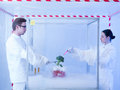 Experimenting on vegetables with liquid nitrogen two scientists in a containment tent a men and a woman and a piece of vegetable Stock Image