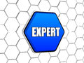Expert in blue hexagon word d button cellular structure business management concept Royalty Free Stock Photography