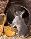 Exploring bunny Royalty Free Stock Image