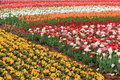 Expo flower garden beautiful flowers in arrangement of jinzhou city china Stock Images