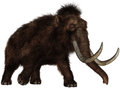 Extinct Woolly mammoth Elephant Isolated Royalty Free Stock Photo