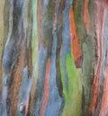 Extraordinary colored bark texture Royalty Free Stock Photo