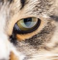 Extreme close-up of green cat`s eye. Royalty Free Stock Photo