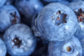 Extreme close up picture of ripe and fresh blueberries. Royalty Free Stock Photo