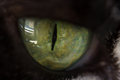 Extreme close up to the beautiful green eye of a cat Royalty Free Stock Photo