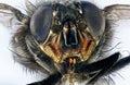 Extreme macro of housefly Royalty Free Stock Photo