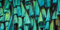 Extreme magnification - Butterfly wing under the microscope Royalty Free Stock Photo