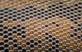 Extreme magnification - Fly compound eye at microscope, 50x magnification Royalty Free Stock Photo